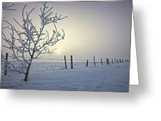 Hoar Frost Covering Trees And Barbed Greeting Card