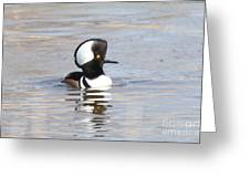 Hodded Merganser Greeting Card