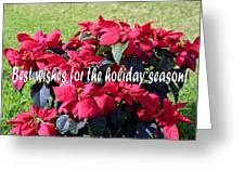 Holiday Greetings With Poinsettias Greeting Card