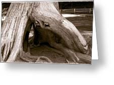 Hollow Tree Greeting Card