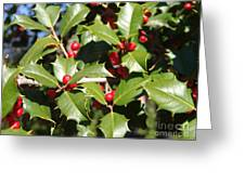 Holly 3 Greeting Card