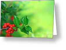 Holly Branch Greeting Card