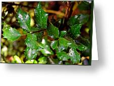 Holly Daze Dew Drops Greeting Card