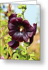 Hollyhock 7193 Greeting Card