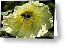 Hollyhock Collecter Greeting Card
