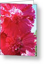 Hollyhock Duet Greeting Card