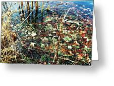 Homage To Monet Greeting Card by Todd Sherlock