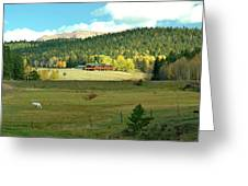 Home On The Range Greeting Card by RJ Martens