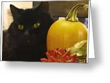 Black Cat And Pumpkin Greeting Card