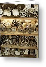Hominid Skull Casts Greeting Card by Volker Steger