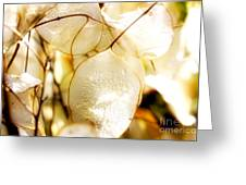 Honesty Plants Close Up Greeting Card