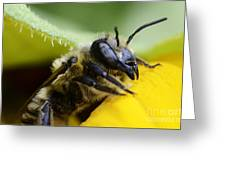 Honey Bee 2 Greeting Card