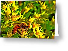 Honey Bee And Sedum  Greeting Card