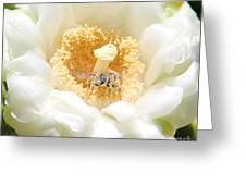 Honey Bee In Cactus Greeting Card