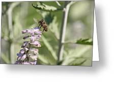 Honey Bee In Flight On Lavender Greeting Card