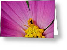 Honey Bee's Candy Dish Greeting Card