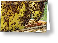Honey Bees On A Beehive And Honeycombs Greeting Card