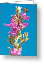 Honey Bees On Sage 1 Greeting Card