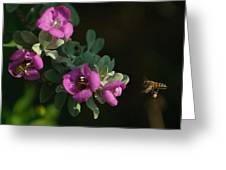 Honey Bees On Sage 2 Greeting Card