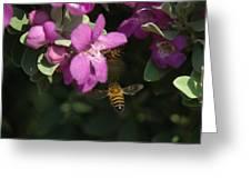Honey Bees On Sage 3 Greeting Card