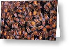 Honey Honey Greeting Card