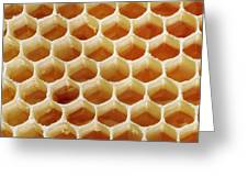 Honey In Wax Honeycomb Cells Greeting Card