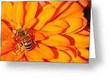 Honeybee On An Orange Zinnia Greeting Card