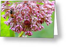 Honeybee On Milkweed Greeting Card
