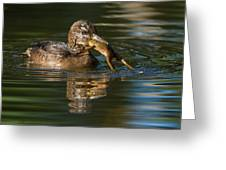 Hooded Merganser And Bullfrog Greeting Card