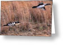 Hooded Merganser Gaining Altitude Greeting Card