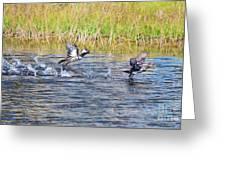 Hooded Mergansers Take Flight Greeting Card by Lynda Dawson-Youngclaus