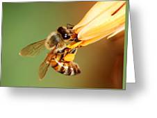 Hooked Bee Greeting Card