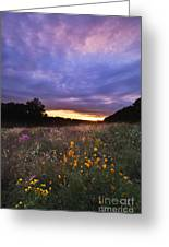 Hoosier Sunset - D007743 Greeting Card