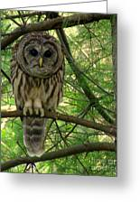 Hoot Hoo Dee Hoo Greeting Card