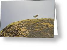 Hopping Blue Bird Greeting Card