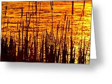 Horicon Cattail Marsh Wisconsin Greeting Card