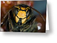 Hornet Head Greeting Card