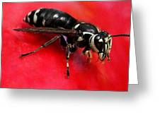Hornet On Red Greeting Card