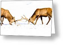 Horns A Plenty Greeting Card