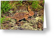Horny Toad Lizard Greeting Card