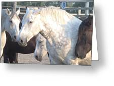 Horse-29 Greeting Card