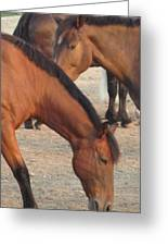 Horse-32 Greeting Card