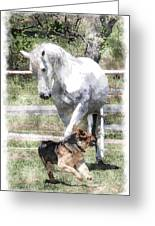Horse And Dog Play Greeting Card