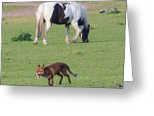 Horse And Fox Greeting Card