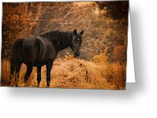 Horse And The Haystack Greeting Card