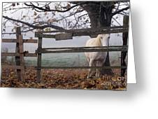 Horse At Fence Greeting Card
