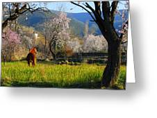 Horse At Field Greeting Card