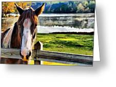 Horse At Lake Leroy Greeting Card