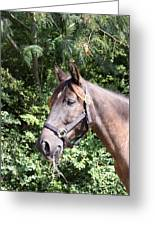 Horse At Mule Day In Benson Greeting Card