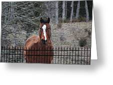 Horse Behind The Fence Greeting Card